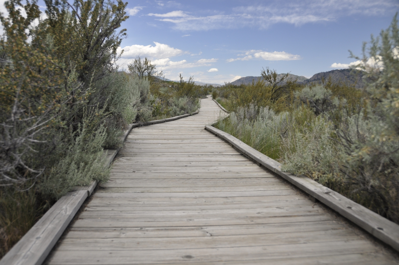 Desert boardwalk