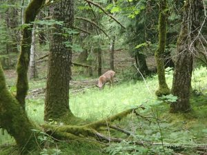 A deer next to our campsite