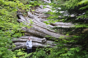 It would have been even bigger than Heather the other way up, most trees are