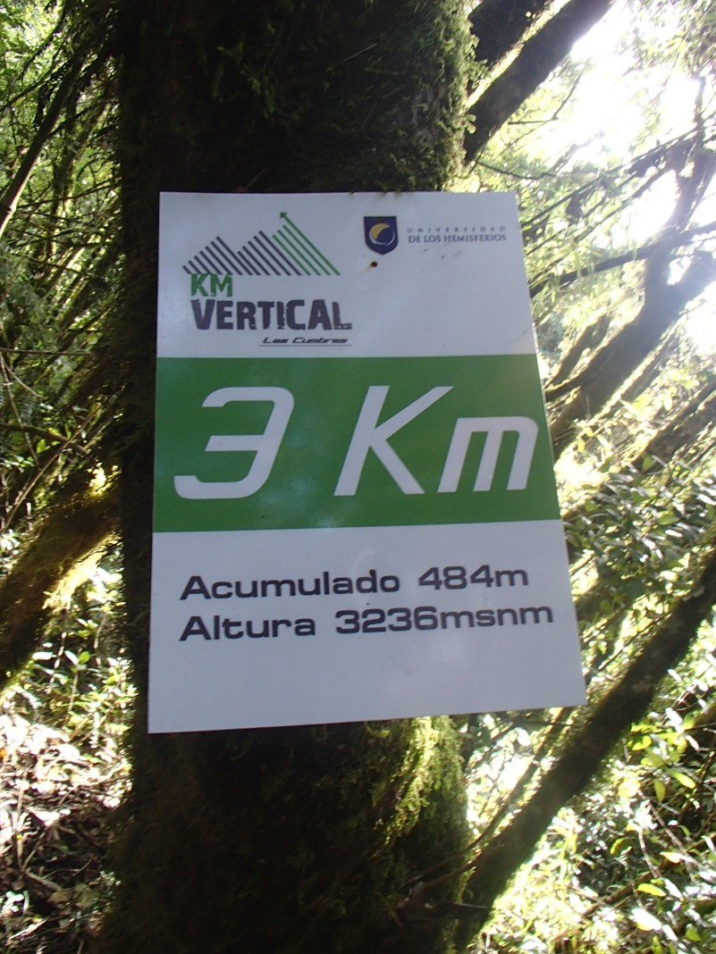 What? A vertical race along this route? Not for me.
