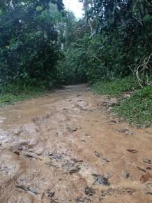 A wee bit muddy