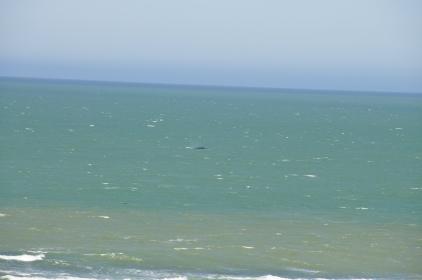 That dark blob was a whale